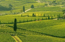 "Tuscany proposes a plan ""for the landscape"""