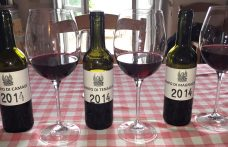 At Trinoro the Cabernet Franc crus of a vigneron dreamer