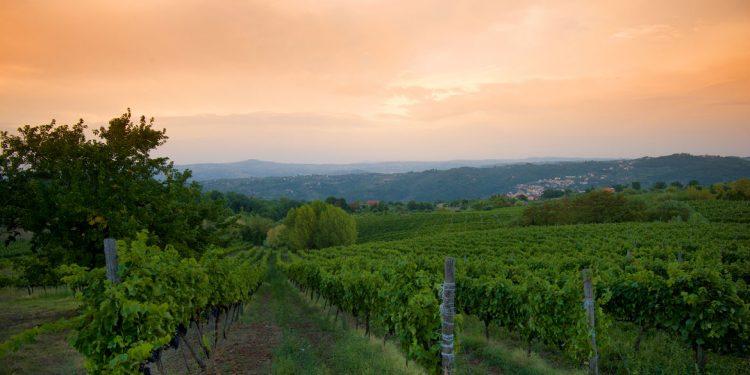 Taurasi, son of Aglianico: an ancient and versatile grape