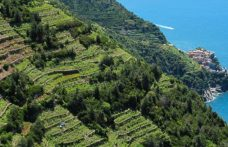 Weekend in the Cinque Terre: trekking, breaks and wine