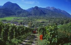 A weekend in Valle d'Aosta among wineries and castles