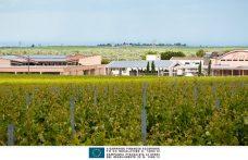 Rivera winery: fine wines from Apulia