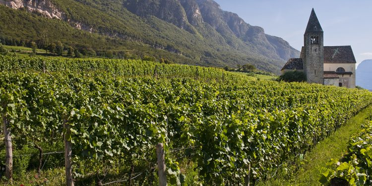 Pinot Noir in Italy, a world to be explored