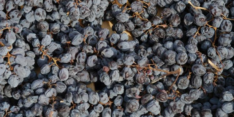 Changes in the Valpolicella Ripasso, Amarone and Recioto production regulations