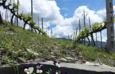 Nonconformist winegrowers