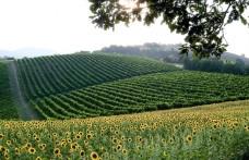 Are sulphite-free white wines possible?