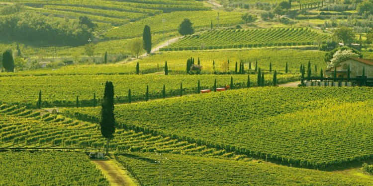 """Tuscany proposes a plan """"for the landscape"""""""