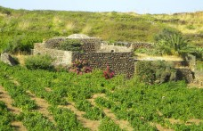 Cantine Pellegrino: a heart divided between Marsala and Pantelleria
