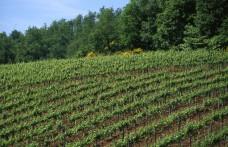 Castello di Querceto: the Philosophy of their Cru Wines