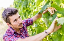 Piwi wines of Thomas Niedermayr