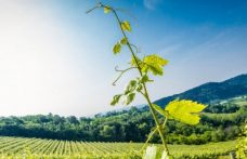 Weekend with Friuli wine, on the borders of Italian viticulture