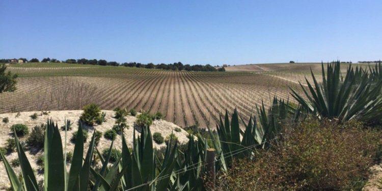 Sicilia en Primeur 2016 a hundred and one souls