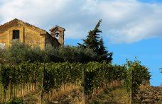Verdicchio wine: a white with personality