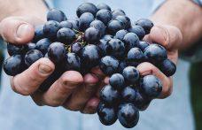What exactly is vegan wine?