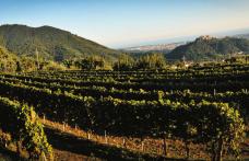 The vitality and rigour of the Colli di Luni wines