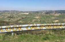Barolo, Barbaresco, Roero. 10 wines from Langhe to try