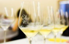 Collio DOCG: official recognition within a year