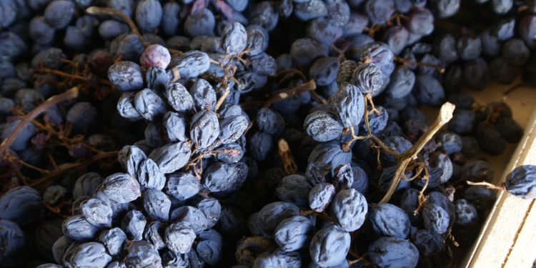 Europe recognises the 'Amarone Families' brand