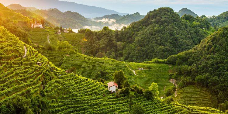The Conegliano Valdobbiadene hills are a UNESCO World Heritage Site